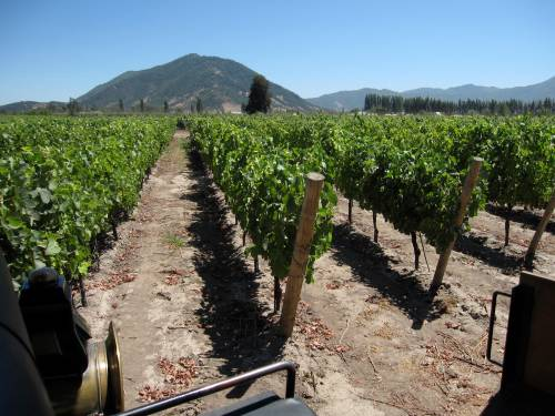 Vineyards, Viu Mament Winery, Chile