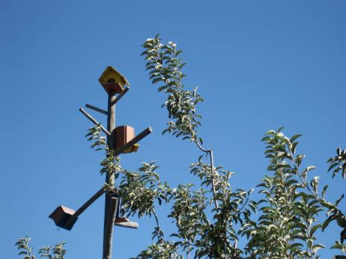 Handmade birdhouses are a haven for insect-eating birds in the organic orchards