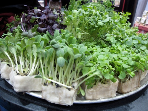 Koppert Cress microgreens